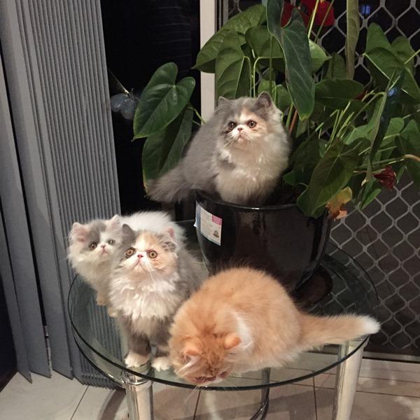 copy80_kittens 4