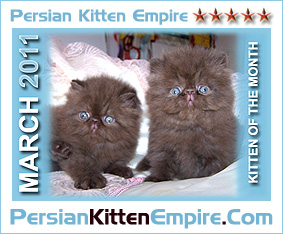 kittens of the month